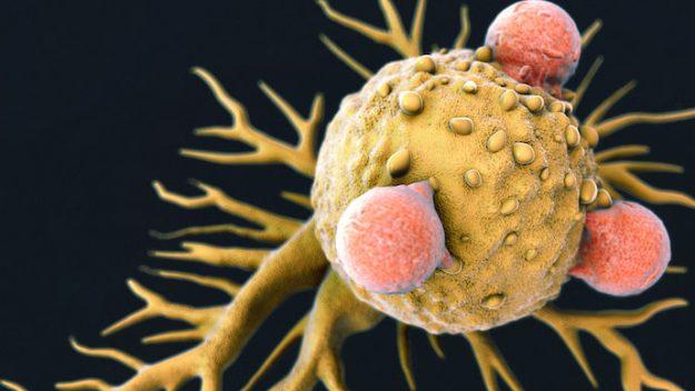 کشف تازه در سیستم ایمنی بدن که 'شاید همه سرطانها را معالجه کند'