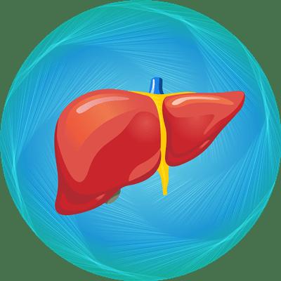 Liver Transplant Package