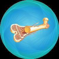 Bone-marrow-transplant-icon-min-en