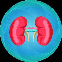 Kidney Transplant Package
